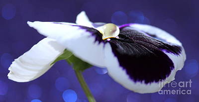 Photograph - Pansy Jewel by Krissy Katsimbras