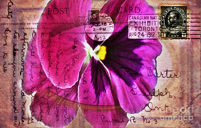 Photograph - Pansy On Vintage 1912 Postcard by Nina Silver