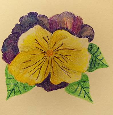 Pastel - Pansy - Pastels by Maria Urso