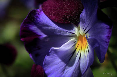 Photograph - Pansy Purple Pollen Flower Art by Reid Callaway