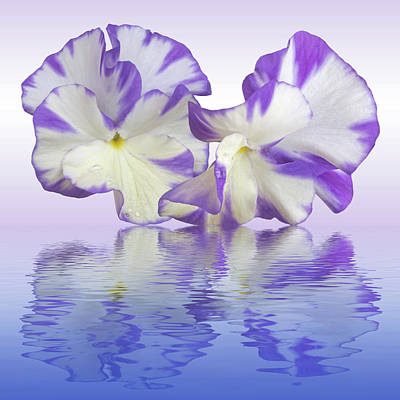 Photograph - Pansy Reflections by Gill Billington