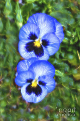 Photograph - Pansy Twins Glow by Kay Brewer