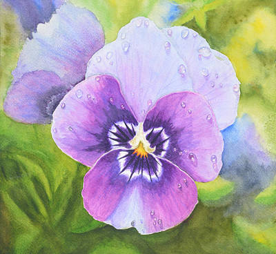 Pansy With Dewdrops Art Print by Neha Soni