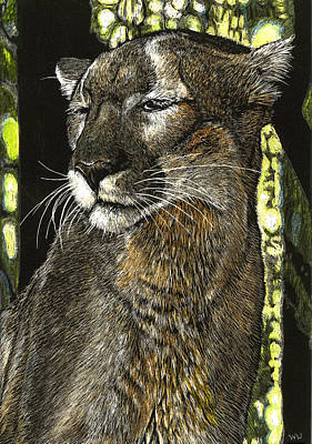 Drawing - Panther Contemplates by William Underwood
