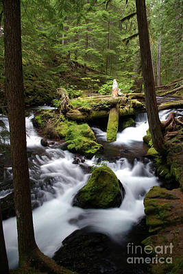 Photograph - Panther Creek 1- Washington by Rick Bures