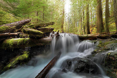 Panther Creek In Gifford Pinchot National Forest Art Print by David Gn