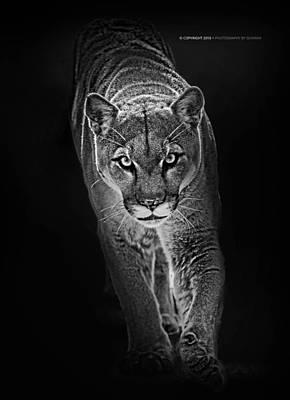 Panther Photograph - Panther by Sunman Studios