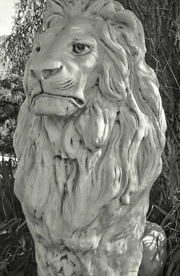 Photograph - Panthera by Jamart Photography