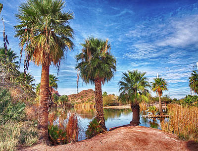 Photograph - Papago Park Lake Palms by C H Apperson