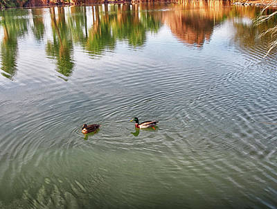 Photograph - Papago Park Lake Ripples by C H Apperson