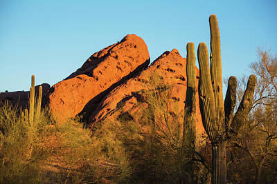 Photograph - Papago Park Mountain At Sunrise Phoenix Az Cactus by Toby McGuire