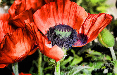 Painting - Papaver by Skye Ryan-Evans