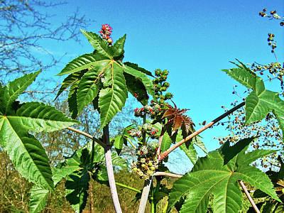 Photograph - Papaya Plant Near River In El Fuerte In Sinaloa, Mexico by Ruth Hager