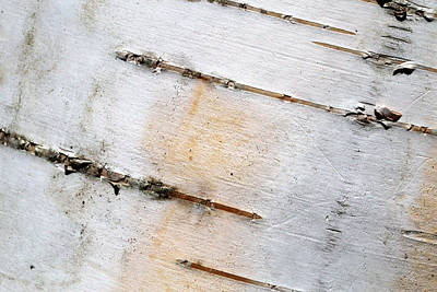 Photograph - Paper Birch Textures 2 by Mary Bedy