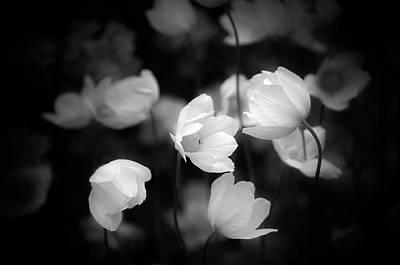 Photograph - Paper Fields by Matthew Blum