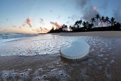 Photograph - Paper Nautilus Bubbles by Sean Davey