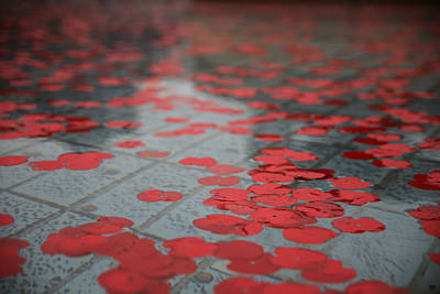 Photograph - Paper Poppies by John Meader