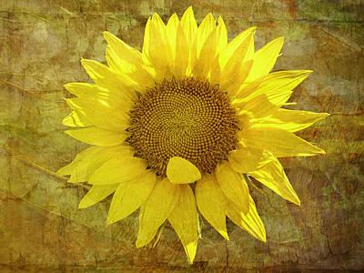 Photograph - Paper Sunshine by Melinda Ledsome