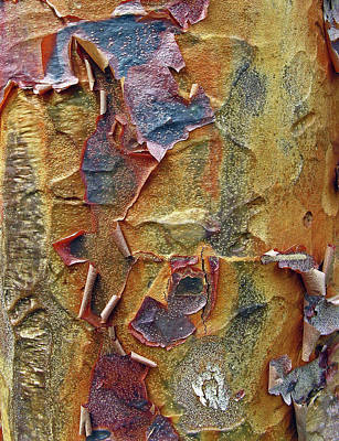 Tree Bark Photograph - Paperbark Maple   by Jessica Jenney