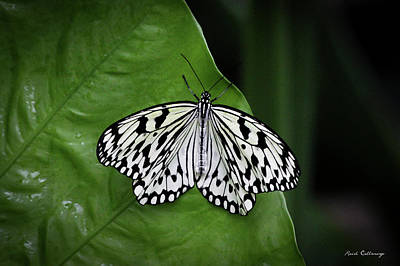 Idea Leuconoe Photograph - Paper Kite Butterfly Cecil B Day Butterfly Center Callaway Gardens Art by Reid Callaway