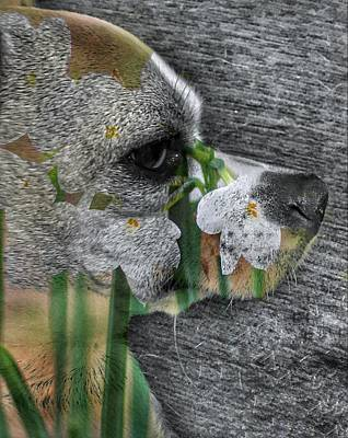 Photograph - Paperwhites And Puppy by Paul Wilford