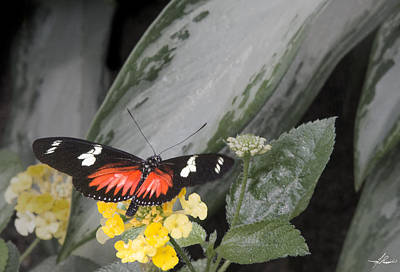 Photograph - Papillon 02 by Philip Rispin