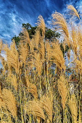 Photograph - Pappusgrass In Fall by Edward Peterson