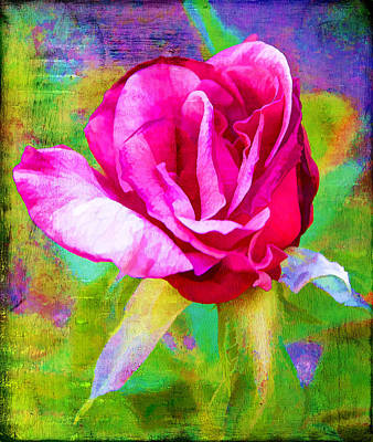 Pappy's Red Rose Art Print by Danielle Miller