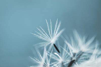 Photograph - Parachutes - T by Aimelle