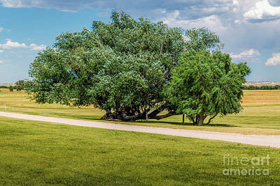 Photograph - Parade Ground Trees by Jon Burch Photography