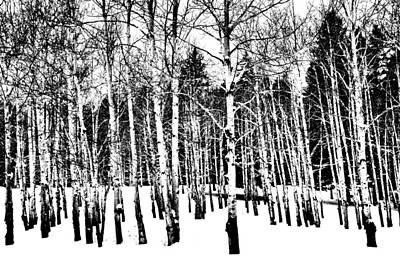 Photograph - Parade Of Aspens by Jacqui Binford-Bell