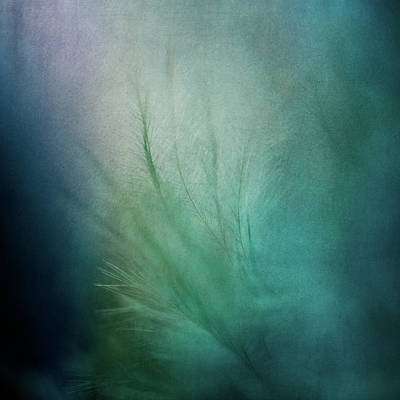 Photograph - Paradise Is A Feeling by Yvette Van Teeffelen
