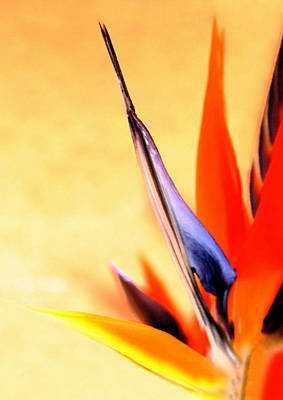Yellow Bird Of Paradise Photograph - Paradise Lost by Marion Cullen