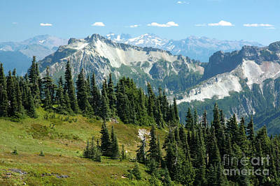 Photograph - Paradise Meadows by Frank Townsley