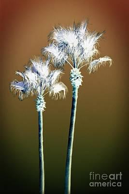 Photograph - Paradise Palm Trees by Ella Kaye Dickey
