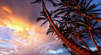 Photograph - Paradise Palms by James Roemmling