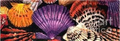 Drawing - Paradise Shells by Glenda Zuckerman
