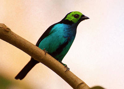Digital Art - Paradise Tanager Digital Oil by Chris Flees