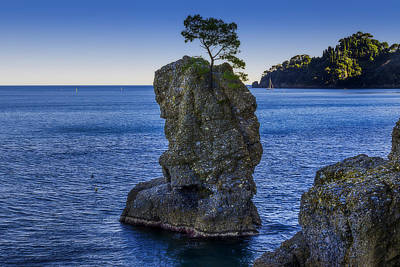 Photograph - Paraggi Portofino Bay And The Tree On The Rock by Enrico Pelos