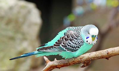 Parakeet  Art Print by Inspirational Photo Creations Audrey Woods