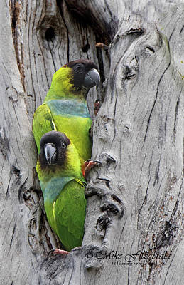Photograph - Parakeet Hole by Mike Fitzgerald