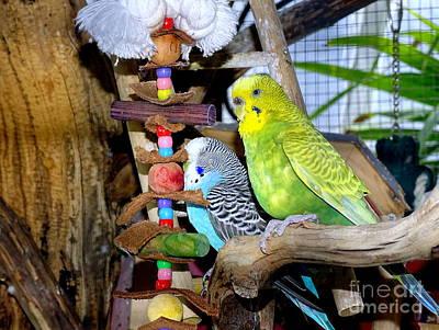 Photograph - Parakeet Pals by Ed Weidman