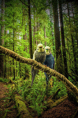 Photograph - Parakeets Perched On A Branch by Randall Nyhof