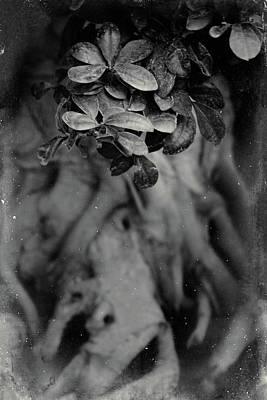 Photograph - Parallel Botany #5175 by Andrey Godyaykin