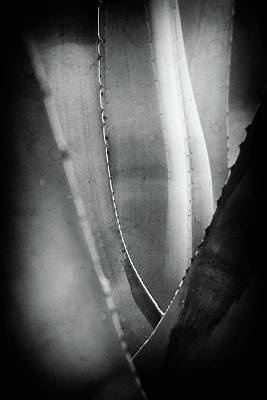 Photograph - Parallel Botany #5177 by Andrey Godyaykin