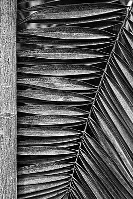 Photograph - Parallel Botany #5207 by Andrey Godyaykin