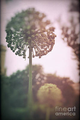Photograph - Parallel Botany #5242 by Andrey Godyaykin