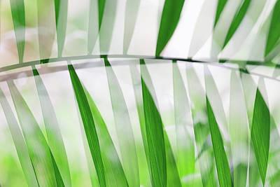 Photograph - Parallel Botany #8356 by Andrey Godyaykin