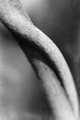 Pyrography - Parallel Botany #8364 by Andrey Godyaykin