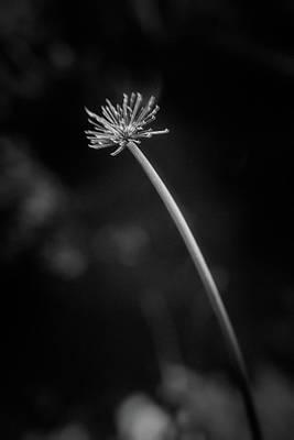 Photograph - Parallel Botany #8413 by Andrey Godyaykin